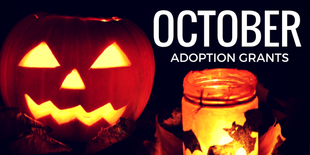 october adoption grants